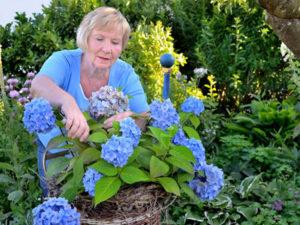 Кристиана Мауте, Гомеопатия для растений. Огород, дача, сад, комнатные растения